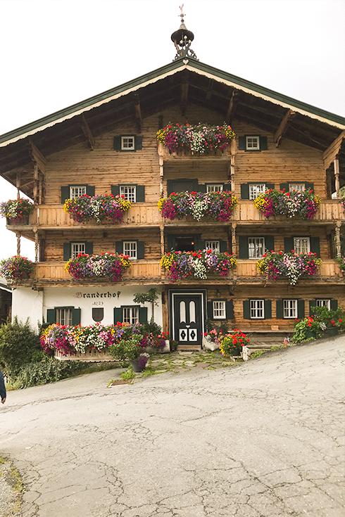 Wildpark Aurach bei Kitzbühel