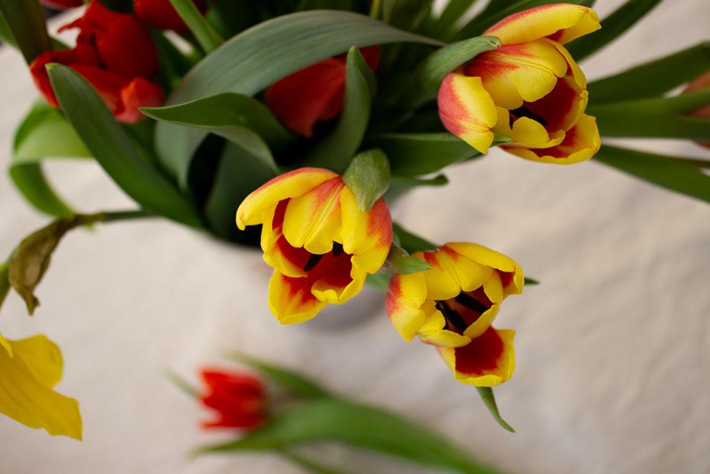 Frühlingsblumen kündigen warmes Wetter und Sonne an: Ich liebe sie!